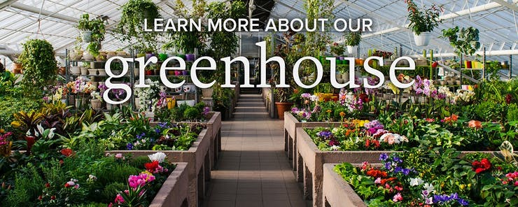 Learn more about our greenhouse